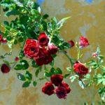 Valentijnsdag Athene